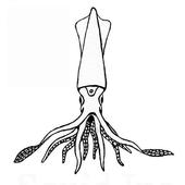 Squid Inc icon