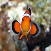Nemo's World icon
