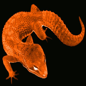 HERPShow icon