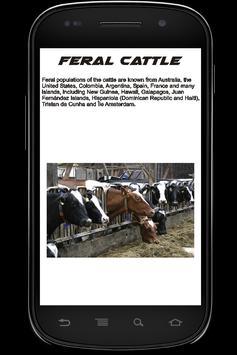 Cow Info Book apk screenshot