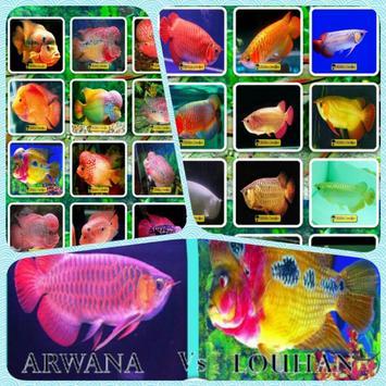 Arowana fish Species And Lohan apk screenshot