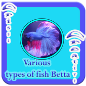 Various Types Of Fish Betta icon