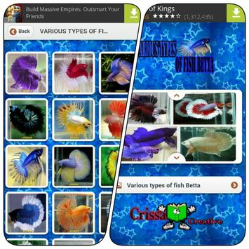 Various Types Of Fish Betta poster