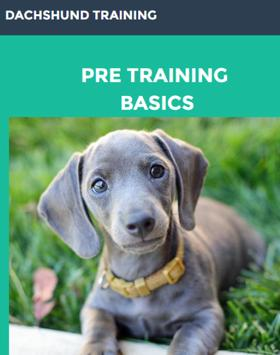 Dachshund Training Guide poster