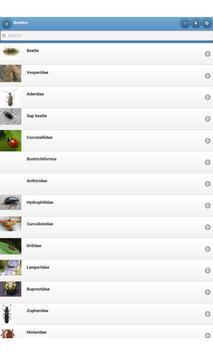 Beetles apk screenshot