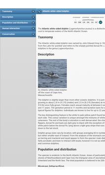 Dolphins apk screenshot