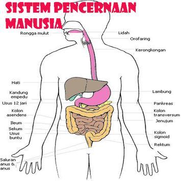 Sistem Pencernaan Manusia poster