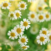 Лекарственные растения icon