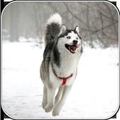 Guide Pets icon