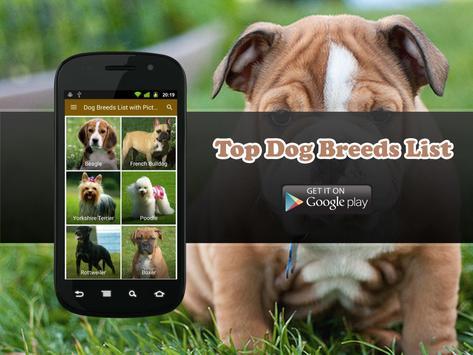 100 Most Popular Dog Breeds apk screenshot