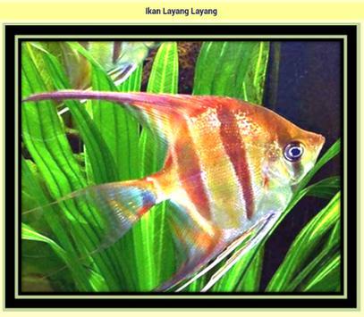 Kind Of Cute Popular Fish apk screenshot