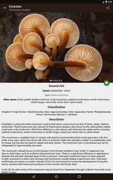 Book of Mushrooms apk screenshot