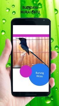 Budidaya Murai Batu apk screenshot