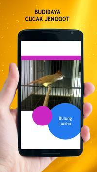 Budidaya Cucak Jenggot apk screenshot