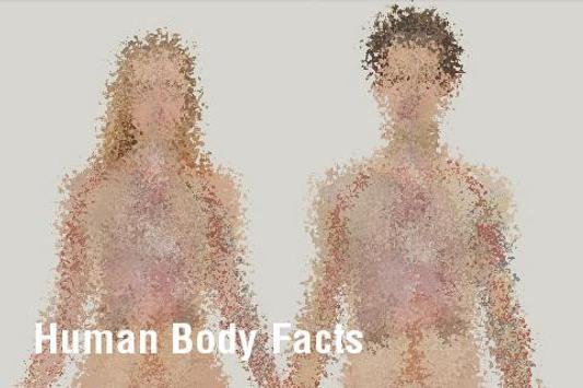 Human Body Facts apk screenshot