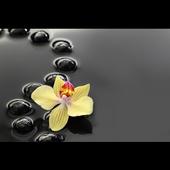 Zen Habits icon