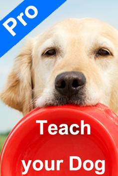 Teach Your Dog poster