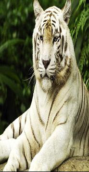Wall Papers Tiger Images poster