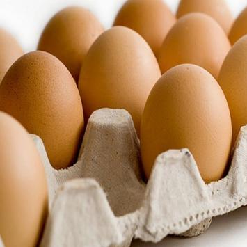 بورصة بيض وكتاكيت السيد خاطر apk screenshot