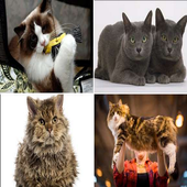 Complete Cat Breeds icon