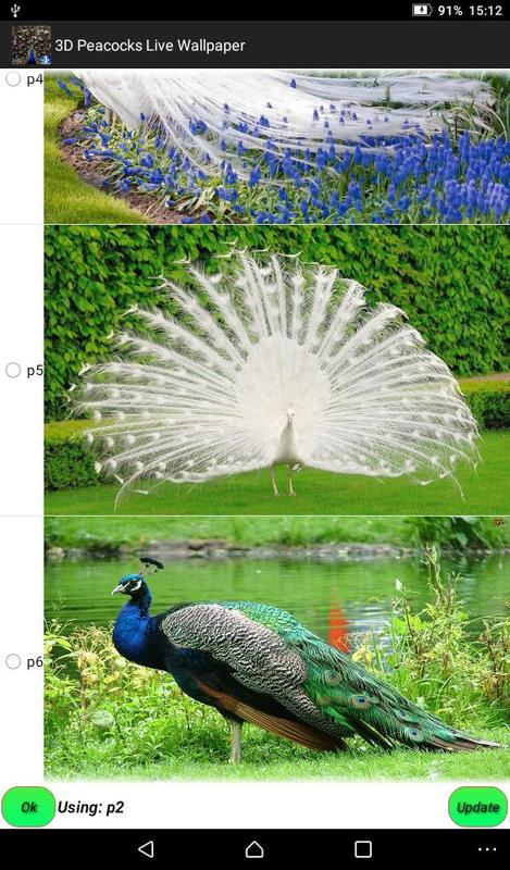 3d Peacocks Live Wallpapers Apk Download Free