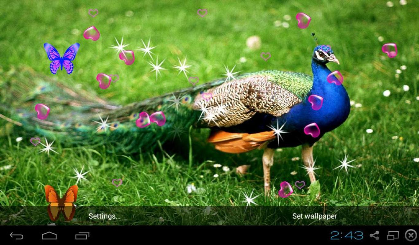 Note 5 Live Wallpapers 1 0 7 Apk Download: 3D Peacocks Live Wallpapers APK Download