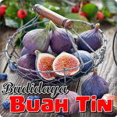 Cultivating Figs Fruit icon