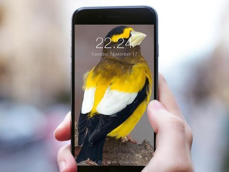 Birds Wallpaper HD Lockscreen apk screenshot