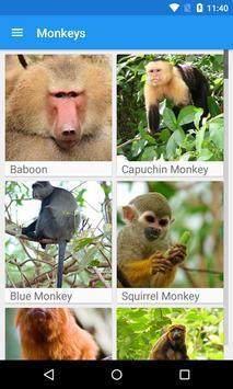 Monkeys App poster