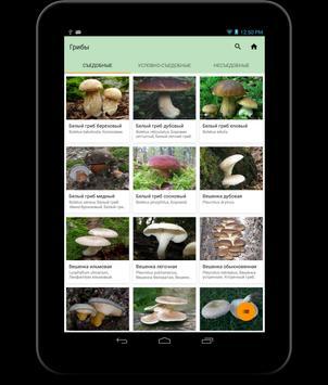 Богатства леса справочник FREE apk screenshot