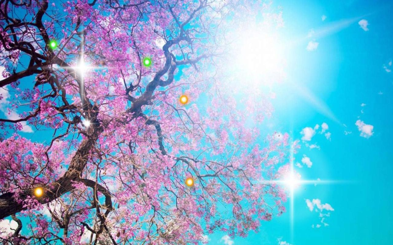 Early spring nature apk download free personalization - Nature wallpaper apk ...