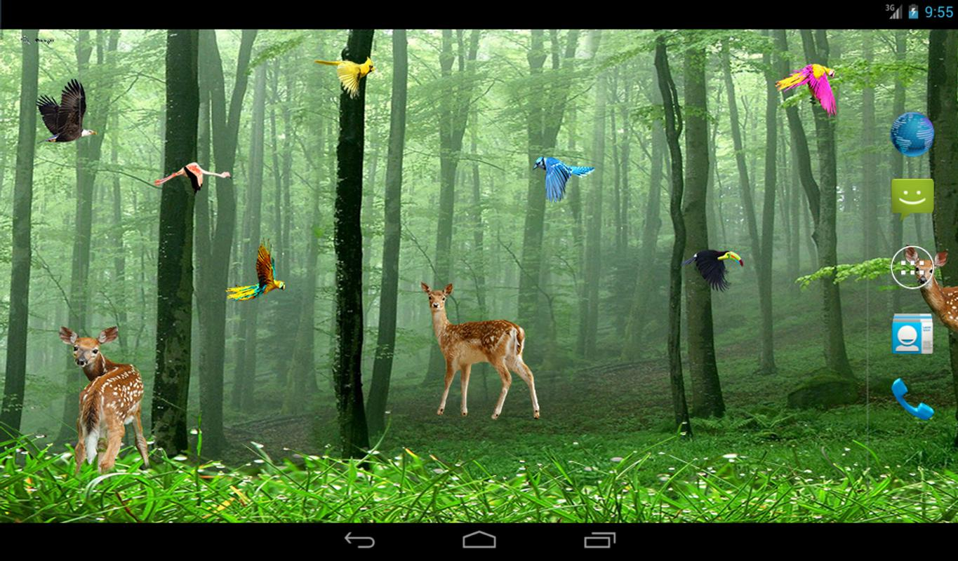 Rain Forest Live Wallpaper Apk Download Free
