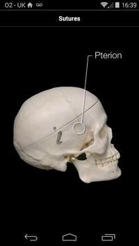 Skull Osteology apk screenshot