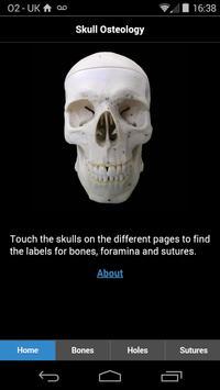 Skull Osteology poster