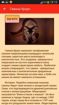 Породы кошек apk screenshot