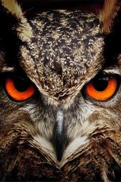 How To Draw Owl Animals apk screenshot