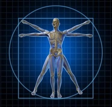 Human Anatomy,Physiology Wiki apk screenshot