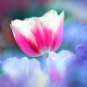Flowers Beauty Wallpapers 2 HD icon
