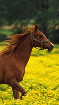 Horses Wallpapers HD poster