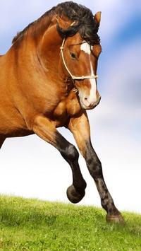 Horses Wallpapers HD apk screenshot