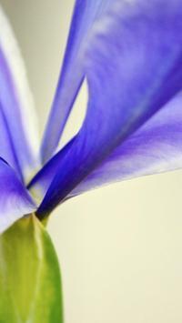 Iris Flower Wallpapers HD poster