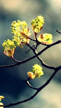 Spring Wallpapers HD apk screenshot