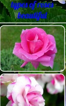 types of roses beautiful apk screenshot