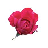 사랑의 불꽃 - 최병준시집 icon