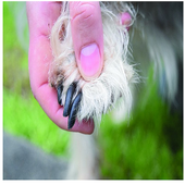 Importance Clipping Dogs Nails icon