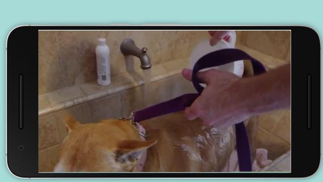 Wash a Dog apk screenshot