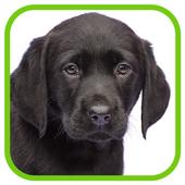 Izzie's Pet Supplies icon