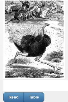 BIBLE ANIMALS poster
