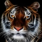 Browser Speed Tiger icon