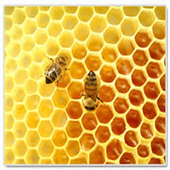 How to Start Beekeeping icon